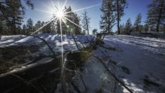 TIME LAPSE - Winter sun moving across forest blue sky - stock footage