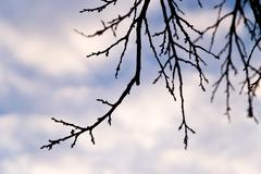 bare tree branches against the sky at sunset - stock photo