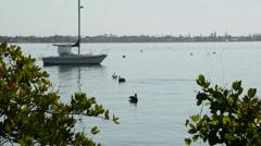 Boat, Birds, Lagoon Stock Footage