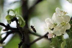 Pollination Stock Photos