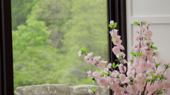 ECU flowers by conservatory window Stock Footage