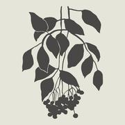 Sprig with berries Stock Illustration