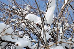 Snow on the bare branches of a tree Stock Photos