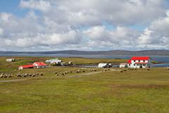 Contryside falkland islands Stock Photos