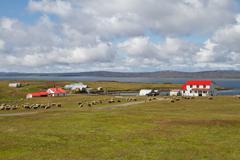 Stock Photo of contryside falkland islands