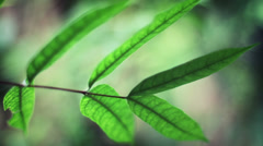 Tropical Plant Leaf in the Jungle. Stock Footage