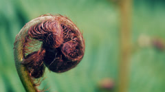 Close-up of young fern frond Stock Footage