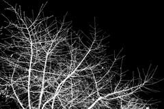 bare tree branches against a black sky - stock photo
