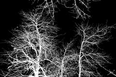 Bare tree branches against a black sky Stock Photos