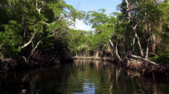 Romantic ride through mangroves in the Everglades Stock Footage