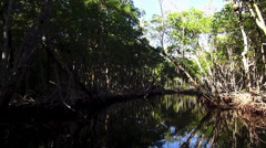 Great nature of Floridas Everglades Stock Footage
