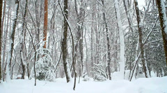 Falling snow in winter forest with snow covered trees. Stock Footage