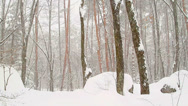 Stock Video Footage of Snowfall in the forest.