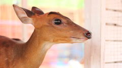 A Close-up of the Head of a Deer Stock Footage