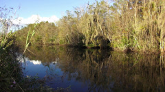 Typical nature of South Florida Everglades Stock Footage