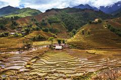 Stock Photo of fields in vietnam