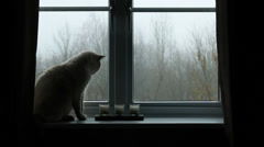 Cat's side profile next to window Stock Footage