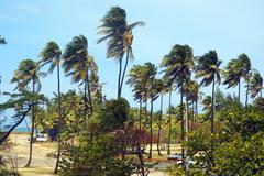palm trees in the wind on a tropical beach horizontal wide - stock photo