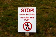 penguins only - stock photo