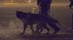 Police Officers Walking With K9 At Night Searching For A Suspect Stock Footage