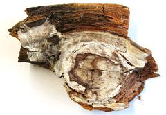 Wood with fungal attack Stock Photos
