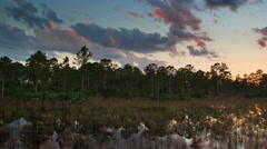 Wetlands Sunset Over Florida Everglades Pine Forest Time Lapse Stock Footage