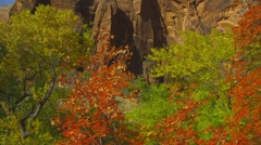 Trees & Rugged Terrain in Zion National Park Stock Footage