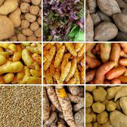 group of peruvian vegetables - stock photo