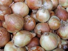 Close-up of fresh white onions Stock Photos