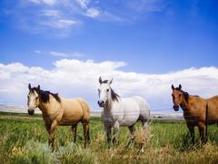 horses of a different color - stock photo