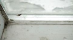 Nasty Housefly on a Window Pane Stock Footage