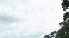 Whangaporoa bay tilt Stock Footage