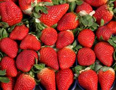 red strawberry to the delight of gourmands - stock photo