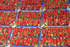 boxes full of juicy red strawberries and sold at local market - stock photo