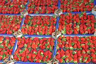 Stock Photo of boxes full of juicy red strawberries and sold at local market