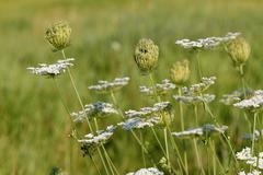wild flowers meadow spring season - stock photo