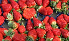 ripe strawberry cups for sale at vegetable market - stock photo