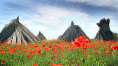 Stacked dry reed in poppy field - stock footage
