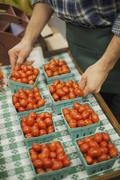 Organic farmer at work. a young man arranging a row of punnets of tomatoes. Stock Photos