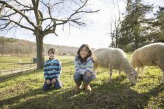 Two children at an animal sanctuary, in a paddock with sheep. Stock Photos