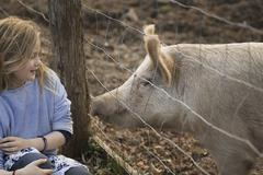 A pig in a paddock. nuzzling against the fence for the attention of a young g Stock Photos