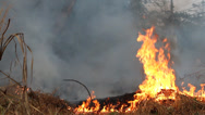 Stock Video Footage of Fire and smoke on dry grass and trees