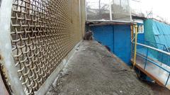 Cat goes along the iron lattice Stock Footage
