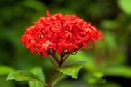 Stock Photo of Summer red flower in the garden