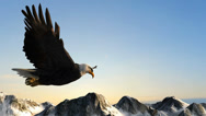 Stock Video Footage of Bald Eagle Flies over Mountains