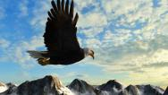 Stock Video Footage of Bald Eagle Flies over Mountains in the sunset