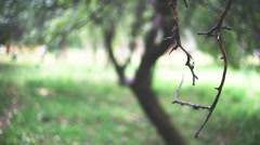 Dry branch Stock Footage