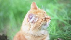 Cat Any Jam Stock Footage