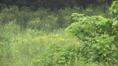 Nature preserve and grasses waving WS Stock Footage