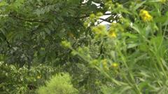 Nature preserve tilt down rack focus Stock Footage